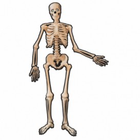 szkielet z kartonu